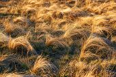 stock photo of dry grass  - Field of yellow dry feather grass - JPG