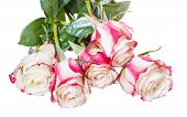 stock photo of bunch roses  - bunch of pink roses isolated on white background - JPG
