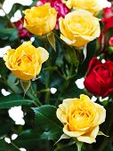 foto of bunch roses  - yellow and red roses in bunch of flowers close up - JPG
