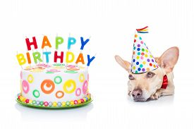 picture of birthday hat  - chihuahua dog hungry for a happy birthday cake with candels wearing red tie and party hat isolated on white background - JPG