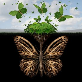 picture of foundation  - Strong foundation concept as the roots of a plant shaped as a butterfly and the leaves of a bush in the shape of flying butterflies as a creative base symbol and the power of freedom and imagination - JPG
