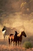 foto of wild horses  - four horses standing in the desert in evening light