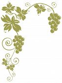 pic of grape-vine  - illustration of golden bunches of grapes and leaves over white background - JPG
