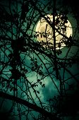 Night Landscape Of Sky And Super Moon With Bright Moonlight Behind Silhouette Of Tree Branch. Sereni poster