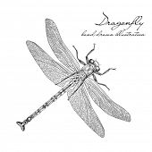 picture of dragonflies  - detailed dragonfly vector - JPG