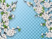 Set Of Spring Blooming Fruit Tree Branches. White Flowers And Green Leaves On A Branch. Element For  poster