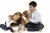 stock photo of niece  - Boy and girl loving on pet Beagle over white background - JPG