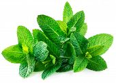 Fresh Spearmint Leaves Isolated On The White Background. Mint, Peppermint Close Up poster