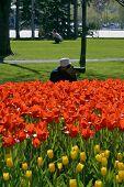 Photography Enthusiasm At Ottawa Tulip Festival Canada poster