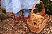 stock photo of oz  - dorothy - JPG