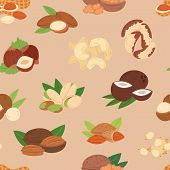 Nut Vector Nutshell Of Hazelnut Or Walnut And Almond Nuts Set Nutrition With Cashew Peanut And Chest poster