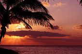 stock photo of sunset beach  - Silhoutte of a palm in sunset on the beach - JPG