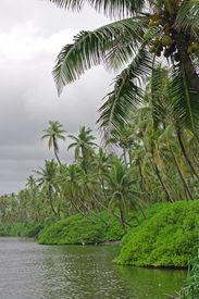 stock photo of tarzan  - Tropical jungle - JPG