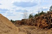 Logs Stacked On Logging And Woodworking Industry. A Stock Pile Of Timber, Chopped Down Trees. Timber poster