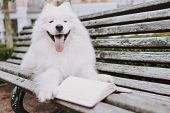 Cute Pedigree Pet Laying Near Book On Bench Outside poster