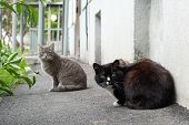 Cats Hungry Homeless Avidly Look In Frame A Grey And Black. Cats Kicked Out Of The House Live On The poster