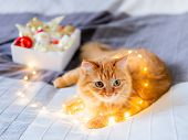 Cute Ginger Cat Tangled In Light Bulb Garland. Fluffy Pet And Box With Christmas Decorations. Cozy H poster