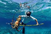 image of spearfishing  - Underwater image of man catching lobster on a speargun while free diving in ocean - JPG