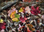 Постер, плакат: Осенние листья