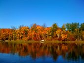 stock photo of loon  - Vivid fall colors against a bright blue sky on a serene Loon Lake in northern Minnesota - JPG