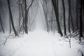 stock photo of snowy-road  - The Christmas mysterious winter snowy forest in a fog - JPG
