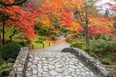 picture of vegetation  - Stone bridge and winding walking path through garden with trees in autumn colors - JPG