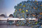 pic of crusher  - corkscrew crusher destemmer in winemaking with cabernet sauvignon grapes - JPG