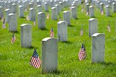 pic of arlington cemetery  - Arlington National Cemetery with a flag next to each headstone during Memorial day  - JPG