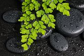 Spa Still Life With Branch Of Fern And Zen Stones With Drops, Closeup
