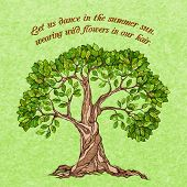 pic of foliage  - Summer tree with green leaves foliage poster vector illustration - JPG