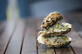 picture of oyster shell  - Raw oyster on wooden table with a close view  - JPG