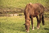 stock photo of bronco  - Horse at the pasture on the Spring season - JPG