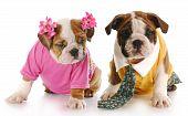 Постер, плакат: Мужские и женские щенок