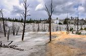 stock photo of mammoth  - Dead trees stand in the travertine terrace of Mammoth Hot Springs - JPG