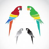stock photo of parrots  - Vector image of a parrot on white background - JPG