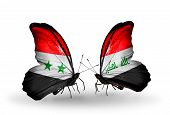 picture of iraq  - Two butterflies with flags on wings as symbol of relations Syria and Iraq - JPG