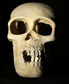 picture of eye-sockets  - Human skull model on black background - JPG