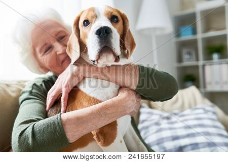 poster of Portrait Of Elegant Senior Woman Hugging Pet Dog Tenderly And Smiling Happily While Enjoying Weekend