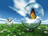 image of chrysalis  - butterfly in a bubble in the meadow - JPG