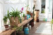 Winter Garden With Lots Of Plants. Space In The House For Relaxation With Flowers. Gardening, Verand poster