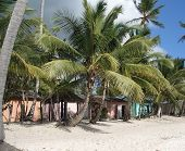 picture of greater antilles  - beach scenery with idyllic colorful wooden cabins at the Dominican Republic a island of Hispanola wich is a part of the Greater Antilles archipelago in the Carribean region - JPG