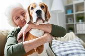 Portrait Of Elegant Senior Woman Hugging Pet Dog Tenderly And Smiling Happily While Enjoying Weekend poster