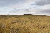 Scottish Hilly Grassland