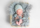 Newborn baby peacefully sleeping in a basket poster