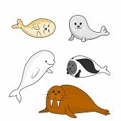 Arctic Marine Mammals Set (beluga Whale, Ringed Seal, Harp Seal, Bearded Seal, Walrus). Vector Carto poster