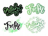 Organic Slogan Brush Lettering. Hand Drawn Word Organic With Green Leaves. Label, Logo Template For  poster