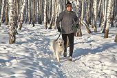 Labrador Retriever Dog For A Walk With Its Owner Man In The Winter Outdoors Doing Jogging Sport. poster
