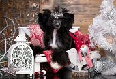 chinese crested dog, New Years puppy, Christmas dog poster