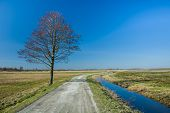 Lonely Tree By A Dirt Road And Blue Sky poster