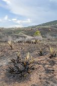 stock photo of collins  - burnt yucca and bushes after Galena wildfire in Lory State Park near Fort COllins - JPG